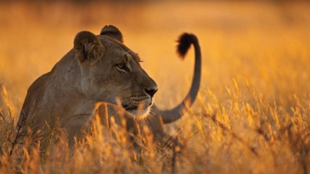 2 Days 1 Night Selous safari