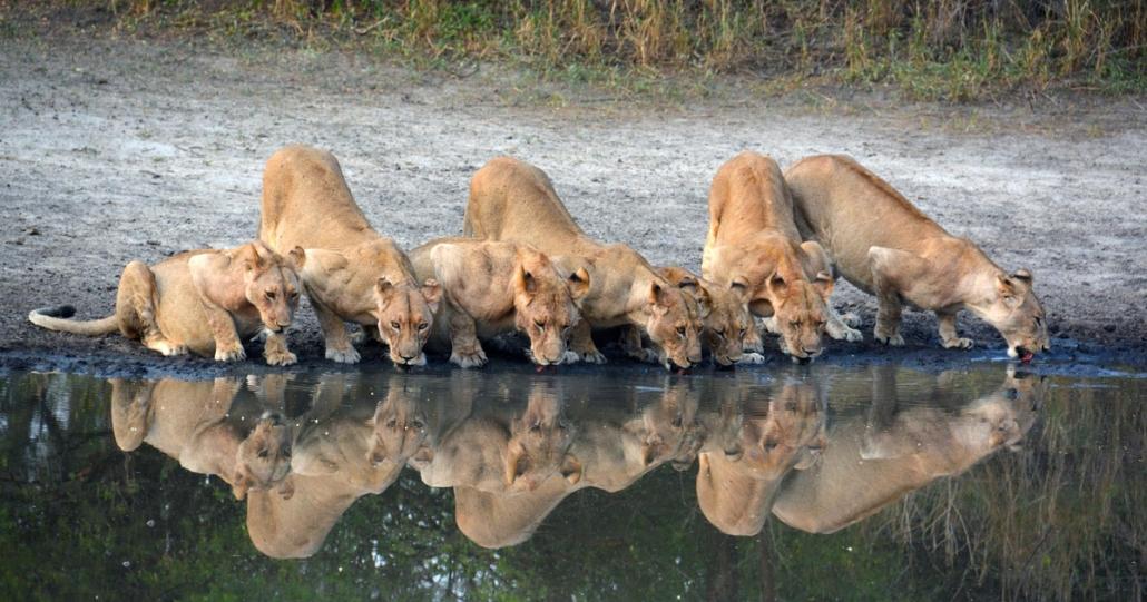 3 days selous national reserve safari